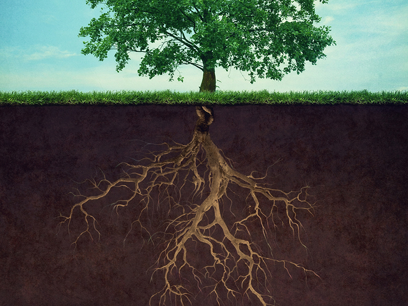 brand strategy root system