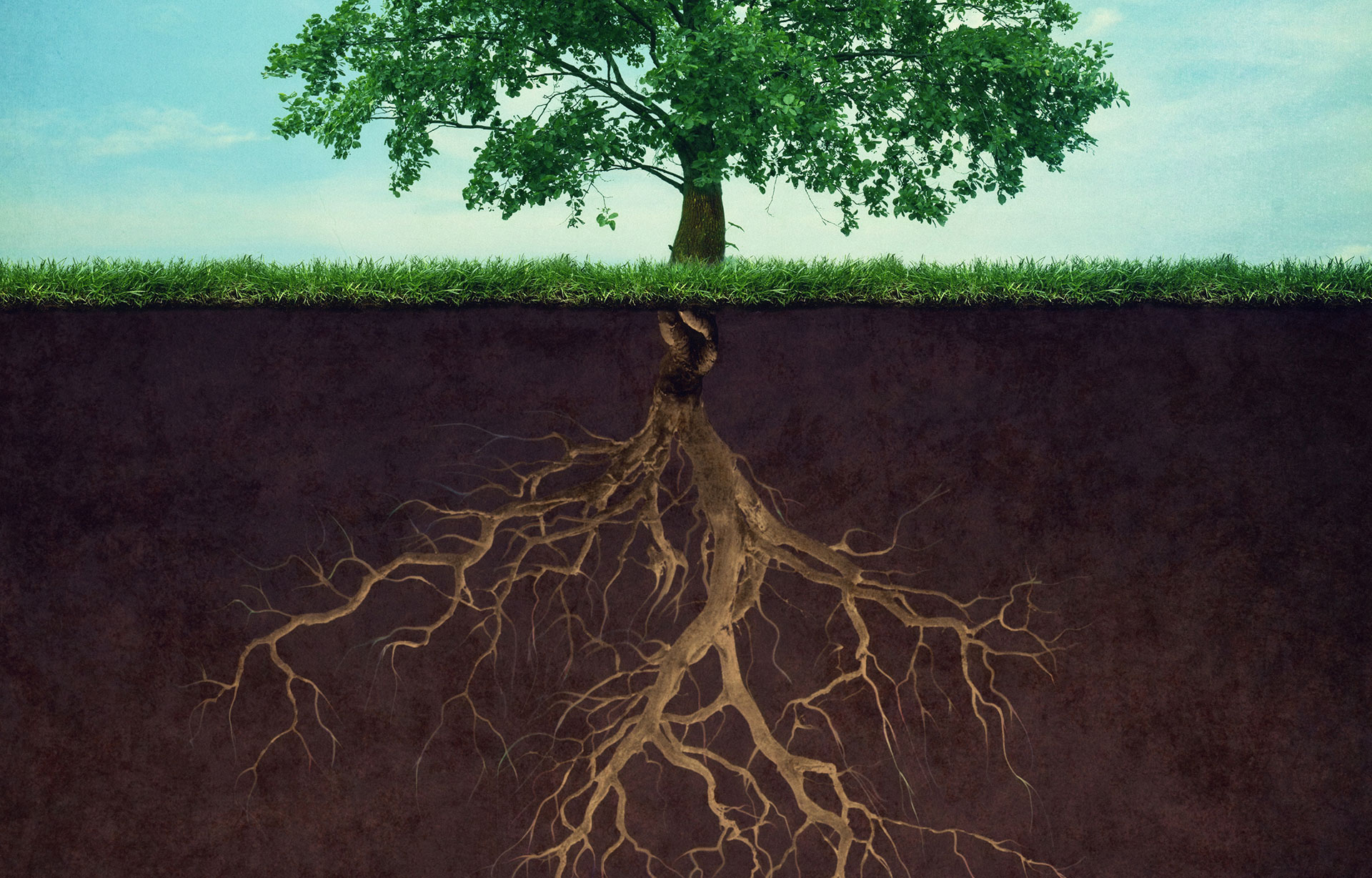 strong brand strategy equal a strong root system